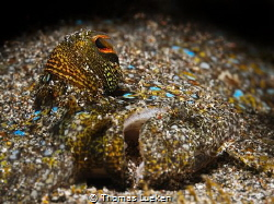 found in Lembeh.. by Thomas Lueken