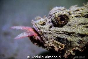 Macro by Abdulla Almehairi