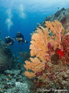 Similan Islands. Thailand by Petteri Viljakainen