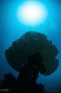 Coral tree under the Sun. by Mehmet Salih Bilal