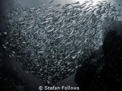 """An ungrateful man is like a hog under a tree eating acor... by Stefan Follows"