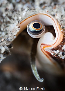 Conch's Eye by Marco Fierli