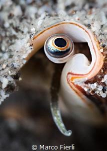 Conch's Eye by Marco Fierli