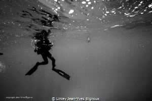 While on a photography dive in Flic en Flac with a slight... by Linley Jean-Yves Bignoux