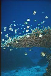 Taken in Australia's Barrier Reef with the Motormarine II... by Morgan Douglas