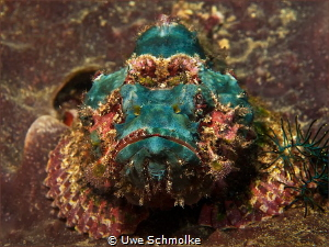 true colours -