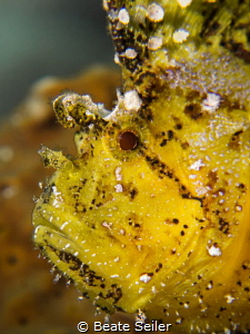 Leaf scorpian fish portait by Beate Seiler