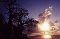Rising sun on baobab trees rather than palm trees, it mak... by Jean-claude Zaveroni