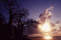 Rising sun on baobab trees rather than palm trees, it mak... by Jean-claude Zaveroni
