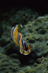 Twister Nudi. by Eric Leong