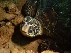 Looking at You...in a puka at the Trench, North Shore. by Glenn Poulain