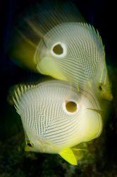 Warped Butterflies taken in Turks and Caicos. Long exposu... by Richard Horn