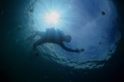 Jelly Fish Lake Diver by Eric Leong