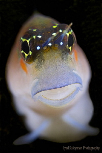Blenny from UAE by Iyad Suleyman