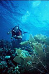 Underwater Gardens. Karpata, Bonaire... by Erich Reboucas