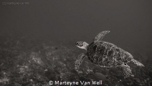 Taking flight . . . . . by Marteyne Van Well