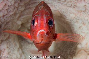 Soldier fish in the barrel sponge. by Mehmet Salih Bilal