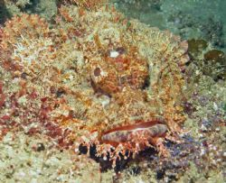 Scorpionfish - Ribbon Reef - Sodwana Bay - South Africa ... by Lindsey Smith