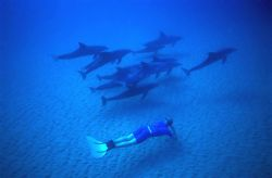 freediving with wild dolphins @ 15m in Mozambique. Natural light photo on breath hold