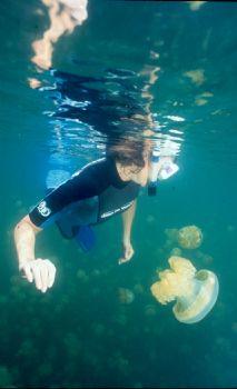 Reflections of Kim, a graceful model among the jellyfish at Jellyfish Lake, Palau. NikV, w/15mm lens & Substrobe 200.