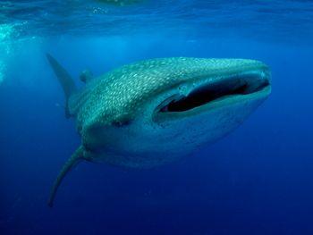 Mr Big . Photo taken in Darwin, Galapagos Islands.