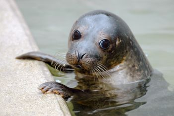 Young Grey Seal. Found this little guy at a seal sanctuary. Posed perfectly for the camera!!! Nikon D70