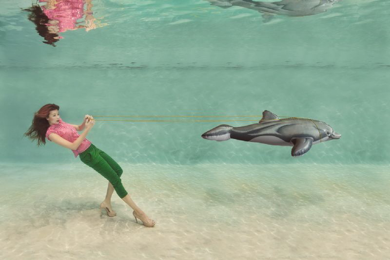 Dolphins are not Pets!