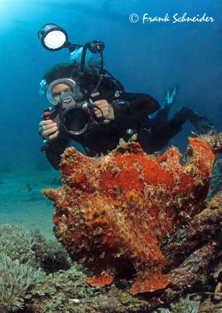Red frogfish and photographing diver; Sabang beach, shallow water, Nikonos RS, Fisheye, Flash Nikon SB104 - Model: Leda