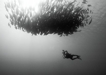 Underwater photographer at work in Ras Mohammed. D100 in Sea & Sea housing, no strobes. Converted to B&W in Photoshop.