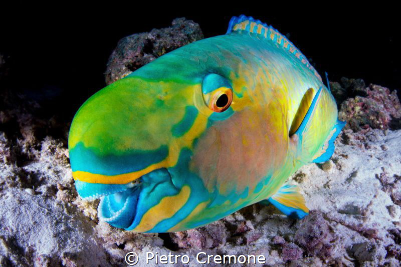 SMILE! A playful parrotfish seem to smile at my dome