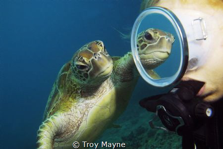 Mirror Mirror. Taken with a Nikon D300 in a Sea and Sea housing with a Sigma 10-20mm lens. Fortunate enough to get the Turtles reflection in the mask as the Turtle swam around the diver on the Great Barrier Reef.