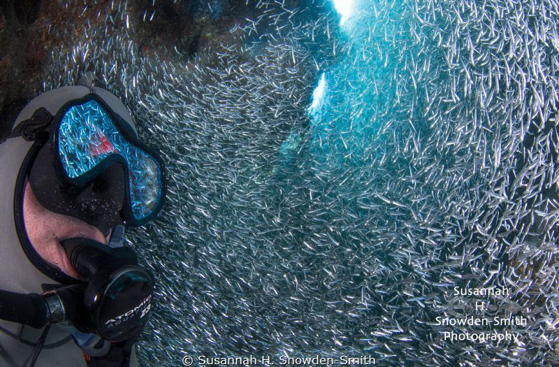 Silversides are reflected in a diver's mask as he watches a huge swirl of the tiny fish.