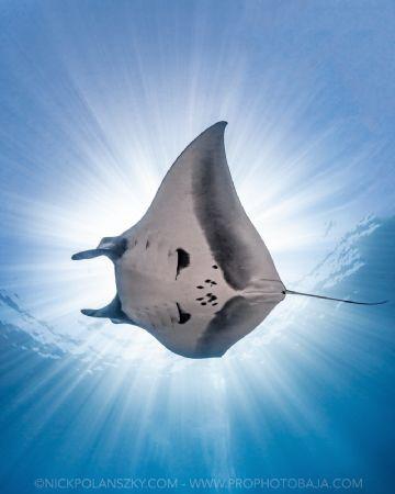 Travel Safely Mantas