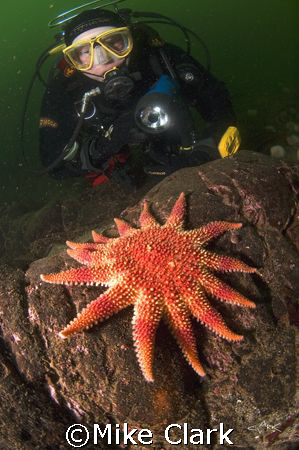Diver viewing vibrant sunstar. nikon d70 with 10.5mm lens.