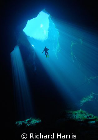 Skydiver. A diver suspended in the clear waters of an Australian Sinkhole.