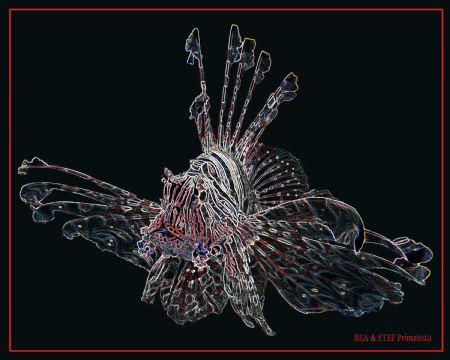 Pterois mutans II