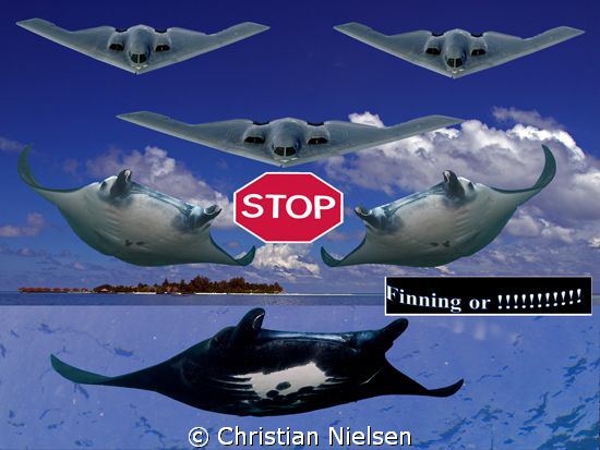 Hopefully the political statement is ok. Just saw a photo of a Stealth plane today and got the idea of combining the Stealth's of the ocean with the manmade ones in joined force to fight finning. Background:Maldives. Manta shots from Bali.