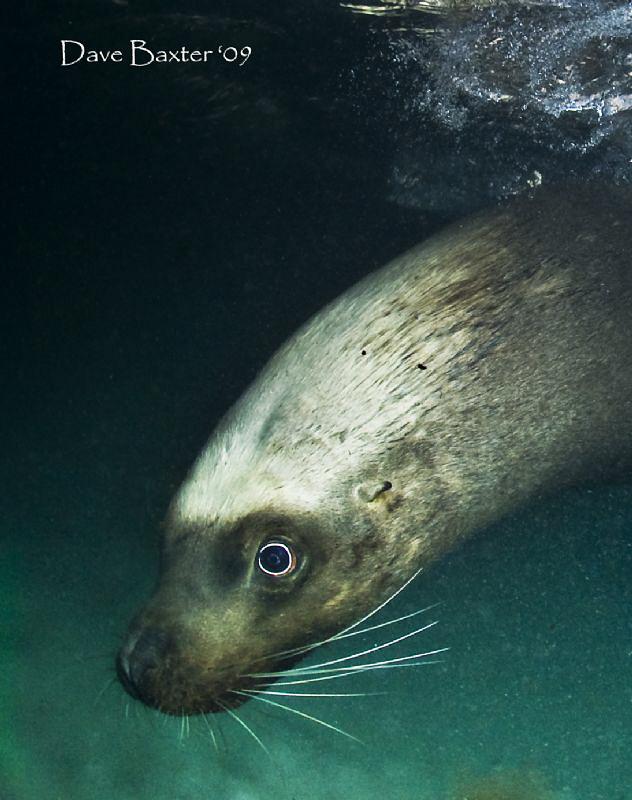 Sammy the sea-lion