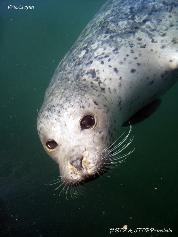 Harbour seal. Canon ixus 980.