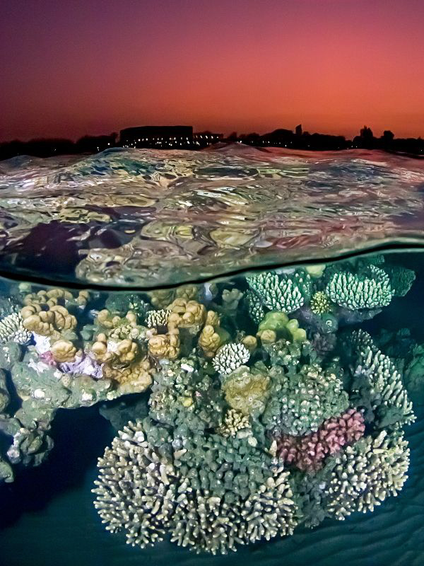 """After the Sunset at the Red Sea Reef"""