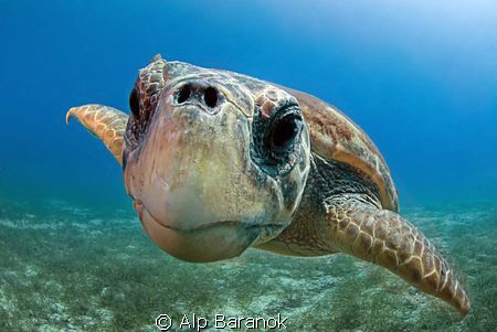 Nose touched to port :) Caretta caretta From Kaş / Turkiye. Taken with Nikon 10,5mm fisheye lens.