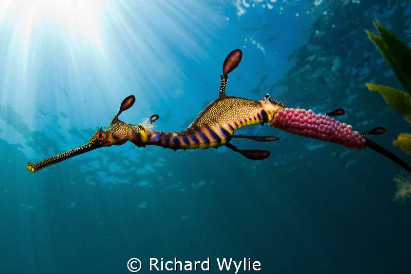 I feel that this photos is getting closer to what I am hearing from the UnderwaterPhotography team - many thanks again!! Hard to get the whole animal in the frame when I'm this close... ISO 100, 1/200 sec, f11, Tokina 17mm