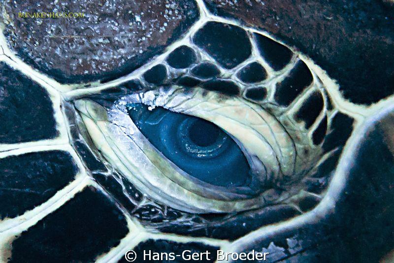Green Turtle Bunaken Island, Sulawesi,Indonesia, Nikon D 300 S, Micro 60, 1/200 ,f 6,3, iso 200 in Kinetics
