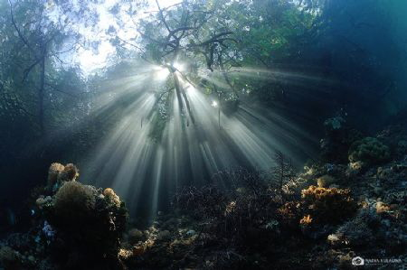 Rays rays rays