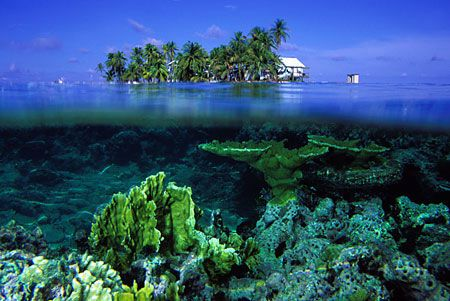A calm day at Carrie Bow Key, Belize Barrier Reef.