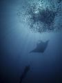 Diver, Manta, Bubbles!