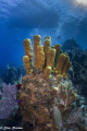Bloody Bay Wall / Little Cayman - Canon T2i/Nauticam/Sea&Sea YS-D1 (2)/Tokina 10-17mm @ 10mm / 1/200, f/8, ISO 200