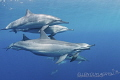 BLISS