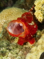 I think this red frogfish was telling the photographer to move on.