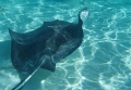 Taken at Stingray City off Grand Cayman Island.